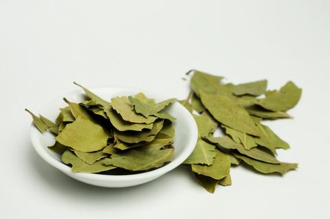 louro-folhas1