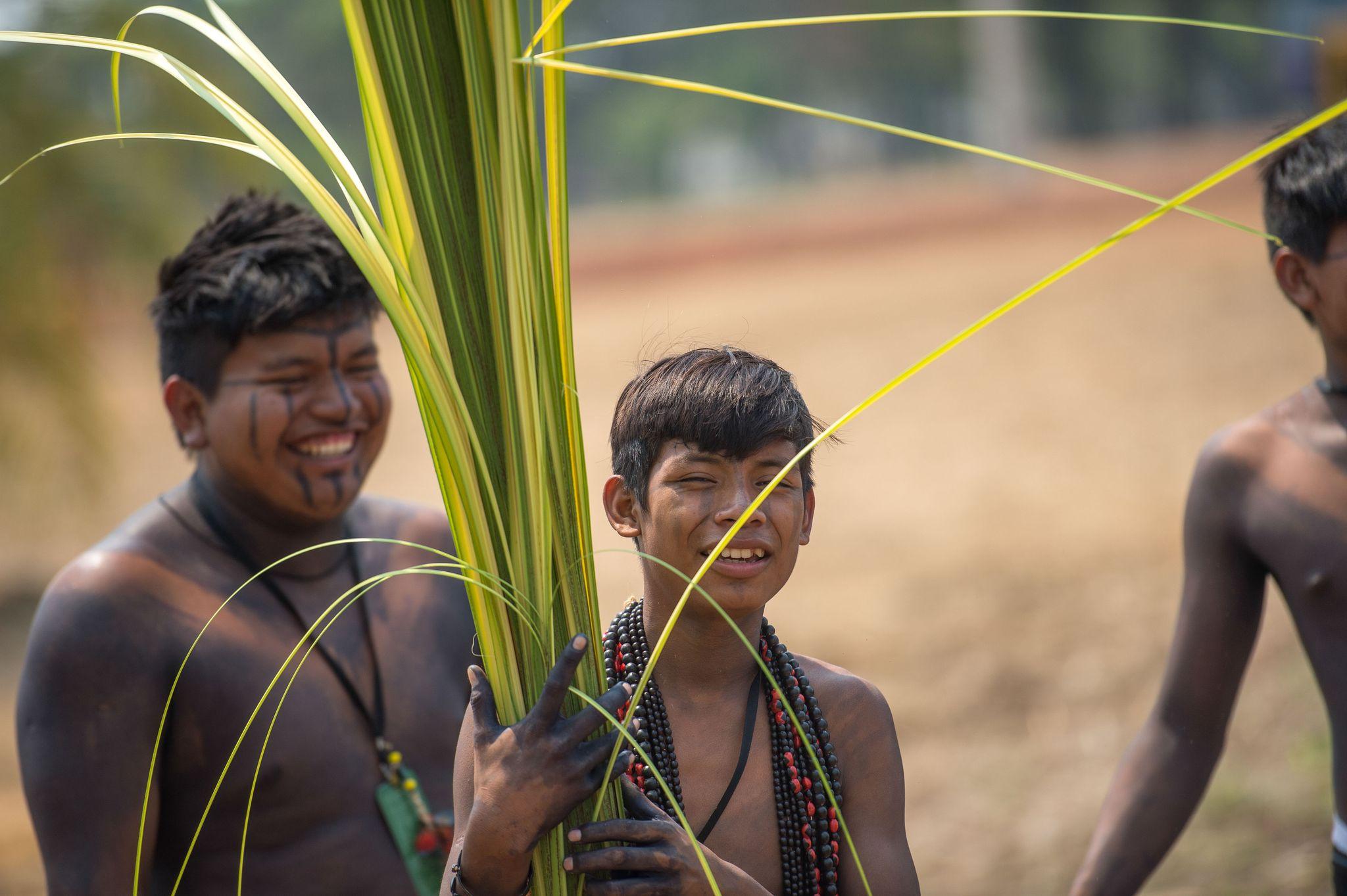 Palmas/TO - Índios da etnia Manoki colhem fibras de buriti para confecção de adereços que serão usados durante os jogos (Marcelo Camargo/Agência Brasil)