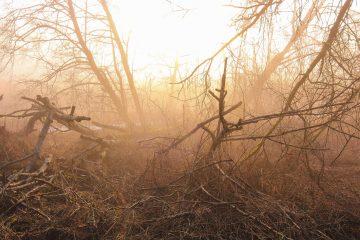 Brasil perdeu florestas