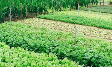 agricultura em portugal