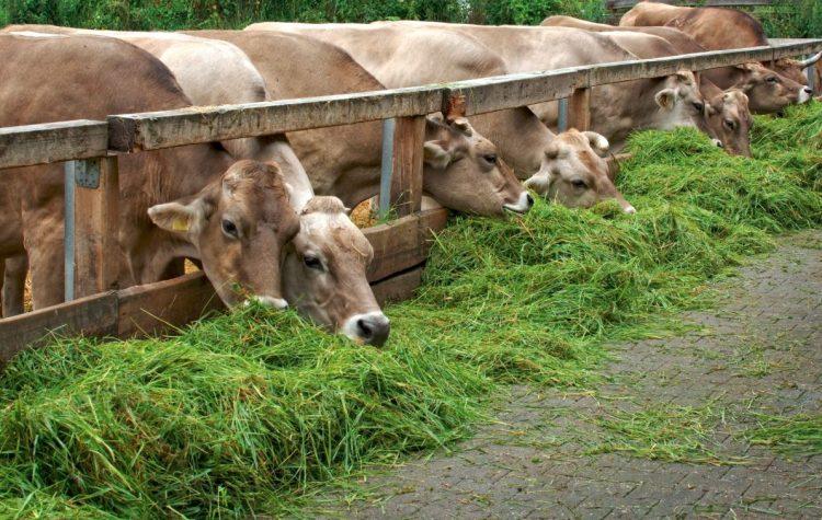 consumo de carne no brasil
