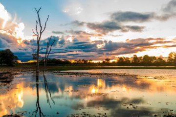 pantanal em mato grosso brasil