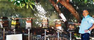 """alt=""""homem cria abelhas""""/>"""